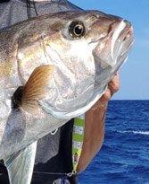 JigsRUs fish about us